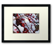 Red Berries Covered in Snow Framed Print
