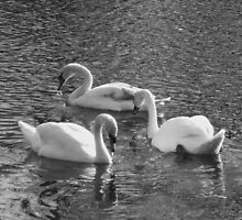 Three Swans, Chelmsford by MichelleRees