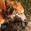 saz sniffing the rock by xxnatbxx