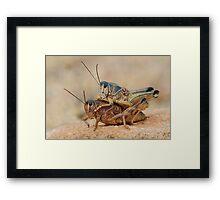 Grasshopper Romance Framed Print