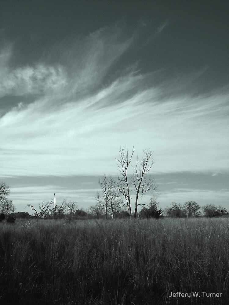 A Tree And The Sky by Jeffery W. Turner
