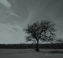 A Tree Framed By The Sky by Jeffery W. Turner