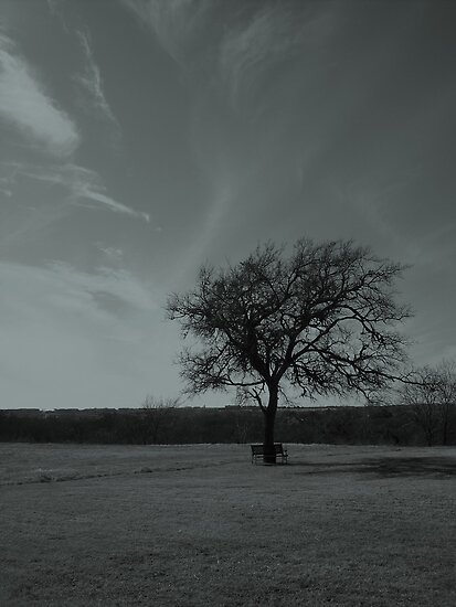A Tree Framed By The Sky by Jeffery W. Turner