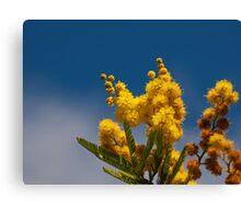 Un bokeh di  mimosa  Canvas Print