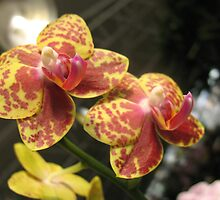 Blissful Orchids by MarianBendeth