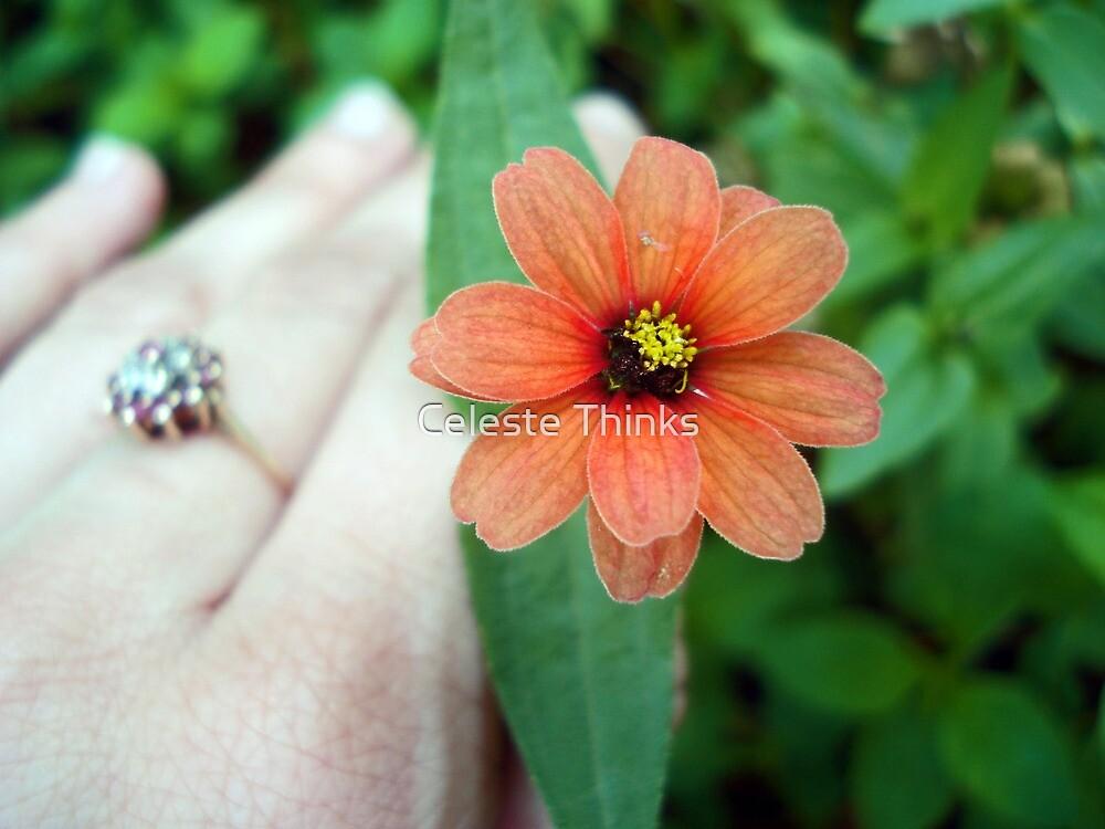 First Spring Flower by Celeste Thinks