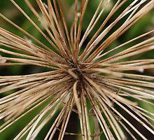 Hidden stick creature by Tisa