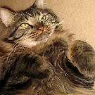 Ooh...Keep Rubbing My Tummy!! by heatherfriedman