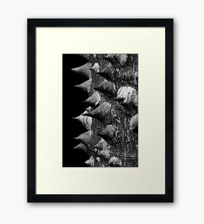 Armour Framed Print