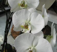 Blanc Orchides by MarianBendeth