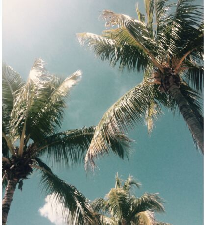 Tropical Palm Trees Sticker