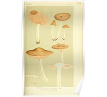 Illustrations of British Fungi by Mordecai Cubitt Cook 1891 V3 0107 AGARICUS  PLETEUS  CHRYSOPHAEUS Poster