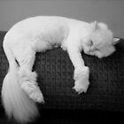SOO SLEEPY by trisha22