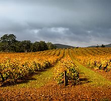 Autumn Vineyard by Ben Goode