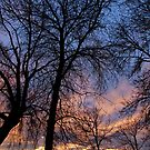 November at Dusk by ys-eye