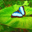 Painted Blue Morpho by Teresa Zieba