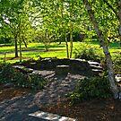 Beech Tree Shade by bicyclegirl