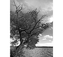 SKELETON TREE Photographic Print
