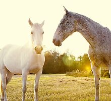 Two Horses by Erin Johnson