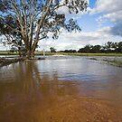 Flooding - Macaulays Lane, Junee Reefs by Will Barton