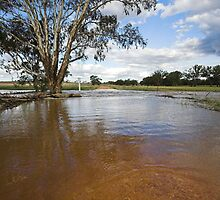 Flooding - Macaulays Lane, Junee Reefs by Will Barton