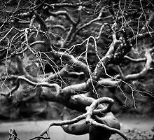 Twisted by Jodi Morgan