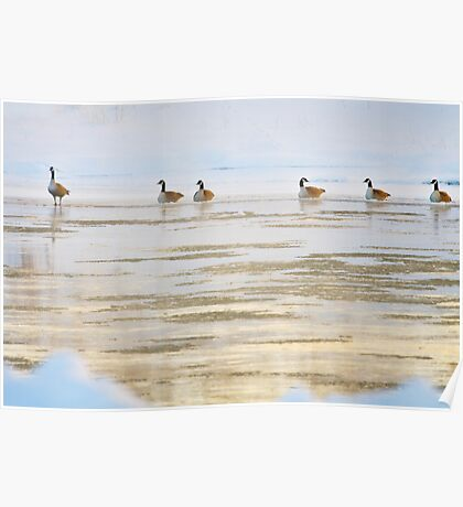 Winter Geese  Poster