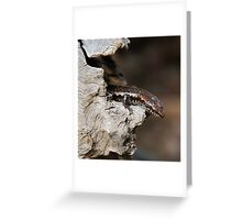 Peek a Boo Lizard Greeting Card