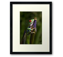 Spring wonder Framed Print