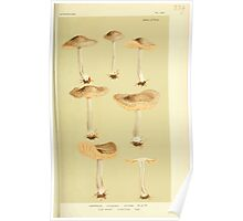 Illustrations of British Fungi by Mordecai Cubitt Cook 1891 V3 0207 AGARICUS  ENTOLOMA  WYNNEI Poster