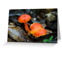 Hygrocybe sp. Greeting Card