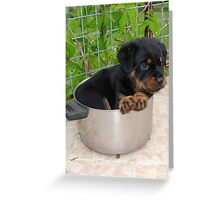 Little Chef: Cute Puppy Greeting Card