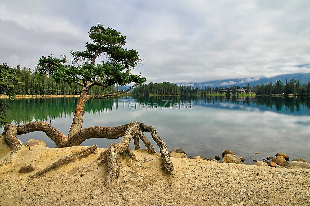 Lac Beauvert, Jasper National Park by Teresa Zieba