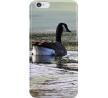 Canada Geese iPhone Case/Skin