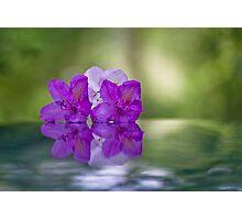 Amazing grace Photographic Print