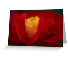 Camellia Curls Greeting Card