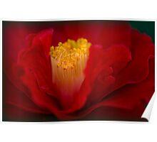 Camellia Curls Poster