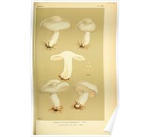 Illustrations of British Fungi by Mordecai Cubitt Cook 1891 V3 0585 AGARICUS  INOCYBE  SAMBUCINUS Poster