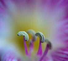 ...lily... by Geoffrey Dunn