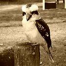 Kookaburra looks good in sepia - Hall's Gap, Vic. by EdsMum