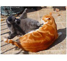 Jeu de chats Photographic Print