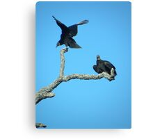 Vultures in the blue Canvas Print