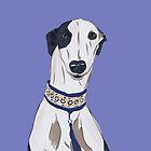 Daisy the Greyhound Portrait by ferwicker