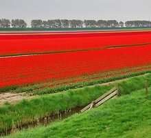 Colors of Spring 4 by Adri  Padmos