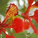 The May Flower by Mian Akif Saghir Ahmad