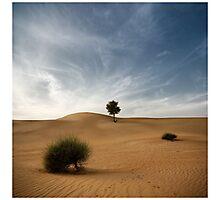 Desert Poetry I - UAE, Dubai Photographic Print