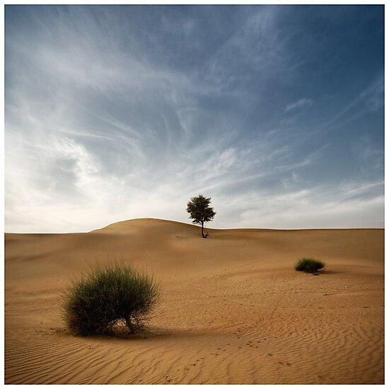 Desert Poetry I - UAE, Dubai by fraenk