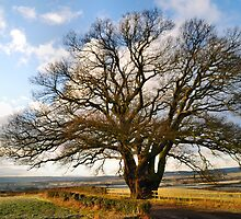 The Dryton Oak by Simon Pattinson