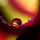 Rainbow Drops by Sharon Johnstone