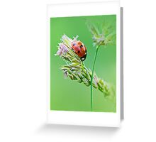 Ladybug sunlight on the field. Beautiful close up of red ladybug in nature Greeting Card